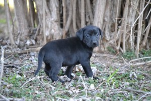 Black female 1b4-20-19_11