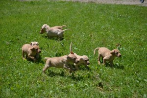 angel pups_3